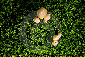 Mushrooms Growing On A Field Vert Stock Photo - Image: 21306330