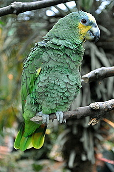 African Parrot Stock Photo - Image: 21308870