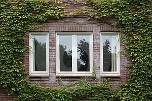 Windows Framed With Ivy Stock Photo - Image: 21313040