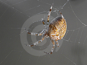 Spider Stock Photography - Image: 21341522