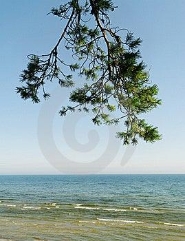 śniadanio-lunch Sosny Morze Obraz Royalty Free - Obraz: 21343026
