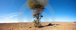 Sahara Desert And The Car Royalty Free Stock Photography - Image: 21357407