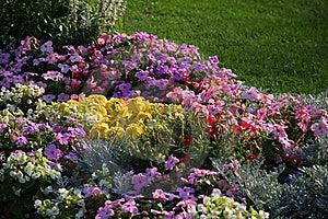 Flowerbed. Stock Photos - Image: 21367033