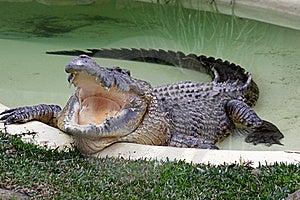 Crocodile Pool. Stock Photography - Image: 21376662