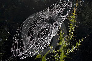 Dewy Spiderweb Royalty Free Stock Photography - Image: 21383267
