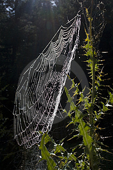 Dewy Spiderweb Royalty Free Stock Image - Image: 21383316