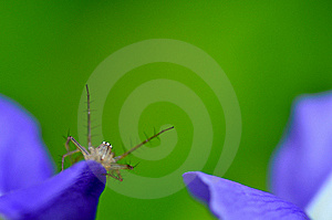 Green Background With Spider Royalty Free Stock Photos - Image: 21385198