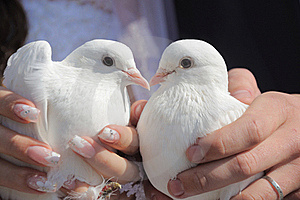 Pair Of Pigeons Stock Photography - Image: 21394492
