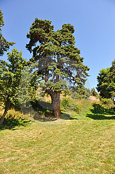 Tree On A Hill Stock Photo - Image: 21395570