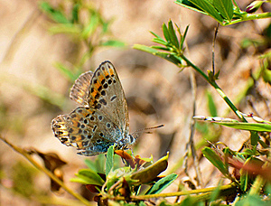 Butterfly Sun Bathing Royalty Free Stock Images - Image: 21419369