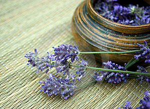 Lavender Stock Photography - Image: 21431312