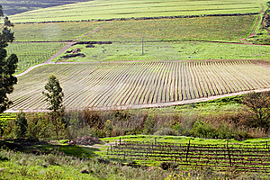 Fertile Valley With Vineyard And Crop Fields Royalty Free Stock Photography - Image: 21446917