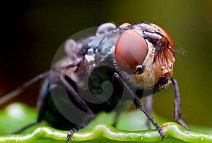 House Fly Stock Photo - Image: 21463770
