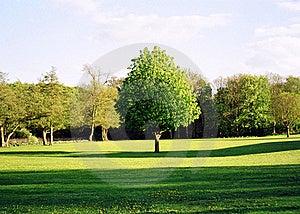 Green Tree Royalty Free Stock Photo - Image: 21487305