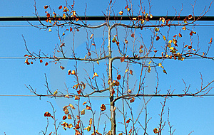 Autumn Tree Royalty Free Stock Image - Image: 21488806