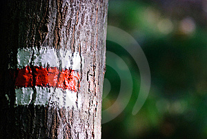 Tourist Mark On A Tree Royalty Free Stock Photography - Image: 21489347