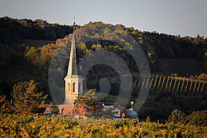 Vineyard Stock Photography - Image: 21504722