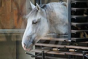 Horse Royalty Free Stock Photo - Image: 21504745