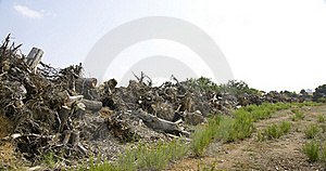 Trunks And Stumps. Royalty Free Stock Images - Image: 21508699
