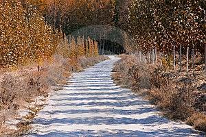 Road Between Poplar Stock Image - Image: 21511781