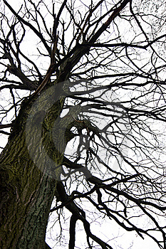 Tree Silhouette Royalty Free Stock Photography - Image: 21515087
