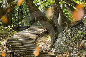 Steps In Forest Stock Photos - Image: 21515613