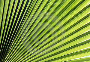 Green Sun Royalty Free Stock Images - Image: 21524699