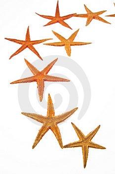 Starfish Stock Photos - Image: 21532333