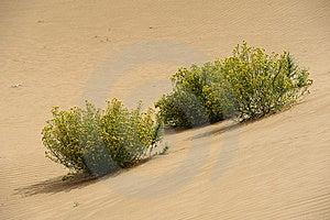 Deserts Royalty Free Stock Photos - Image: 21533468