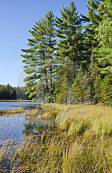 Evergreen Trees By A Lake Royalty Free Stock Photography - Image: 21537297