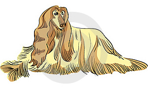 Vector Dog Afghan Hound Breed Color Royalty Free Stock Images - Image: 21543479