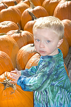 Little Boy With Pumpkins Royalty Free Stock Images - Image: 21576479