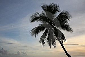 Single Palm Tree At Sunset Royalty Free Stock Images - Image: 21576519