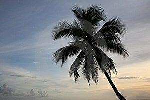 Single Palm Tree At Sunset Royalty Free Stock Images - Image: 21576519
