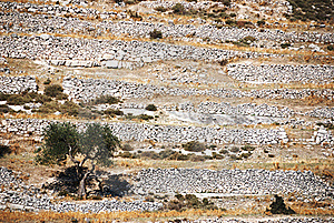 Stone Walls Royalty Free Stock Images - Image: 21587669
