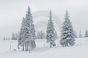 Winter Scene Royalty Free Stock Photography - Image: 21593707