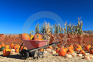Pumpkin Sale Royalty Free Stock Photography - Image: 21599407