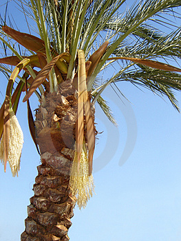 Nature-scenery With Palmtrees Stock Photo - Image: 2162010