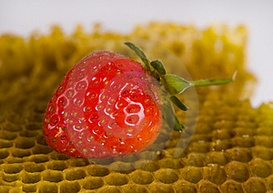 Honey Comb Stock Image - Image: 2168861