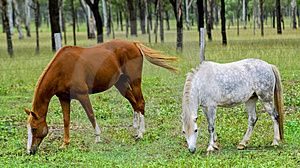 Horses grazing Free Stock Photos