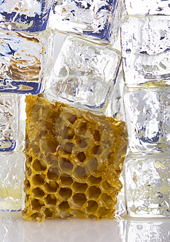 Cold Honey Comb Royalty Free Stock Photos - Image: 2169088