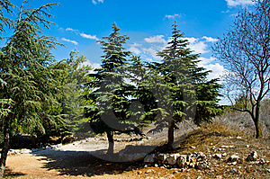 Tree Landscape Royalty Free Stock Photography - Image: 21600217