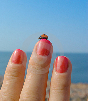 Ladybird On Her Finger With A Manicure Royalty Free Stock Images - Image: 21613289