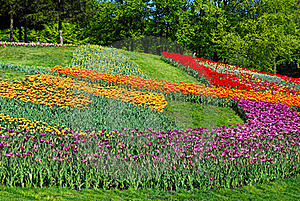 Decorated Lawn With Multicolored Tulips Stock Photos - Image: 21615283