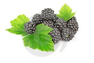 Blackberries Stock Image - Image: 21615901
