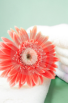 Flower And Towel Royalty Free Stock Photography - Image: 21623387