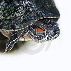 Turtle Stock Photography - Image: 21668502