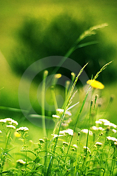 Field Stock Images - Image: 21670964