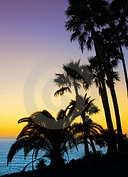 Palm Trees Silhouette Stock Photos - Image: 21673203