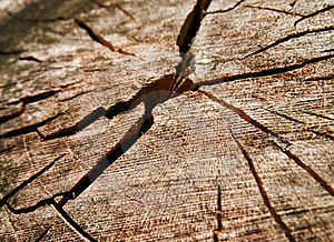Old Dried Wood Texture Royalty Free Stock Photography - Image: 21685287